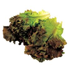 Red Leaf Lettuce 1 Bunch, 적상추 1번치, 紅葉生菜 1束