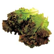 Red Leaf Lettuce 1 Bunch