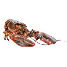 Live Lobster 1.1-1.3lb(498-589g)