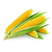 Yellow Corn 3 Ea